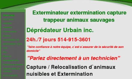 Contrôle de la faune Urbaine exterminateur extermination
